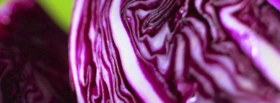 Как вырастить краснокачанную капусту