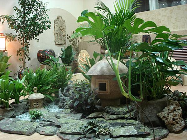 комнатные растения 1