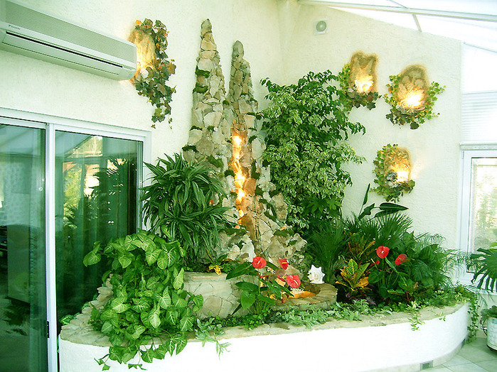 комнатные растения 2