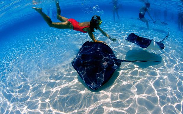 Удивительный подводный мир океанов