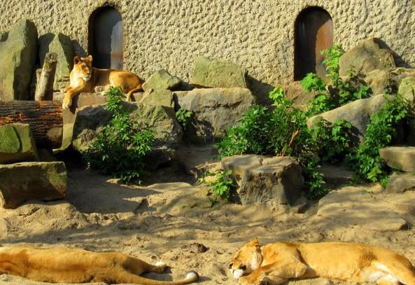 Зоопарк Амстердама