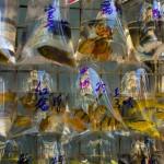 Рынок «Золотая рыбка»