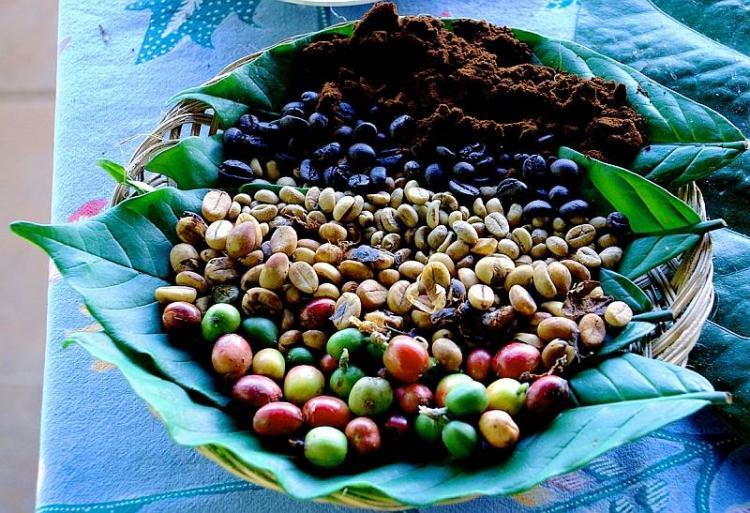 Кофейные плантации Дока