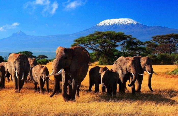 Национальный парк Масаи-Мара