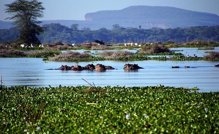 Национальный парк озера Найваша