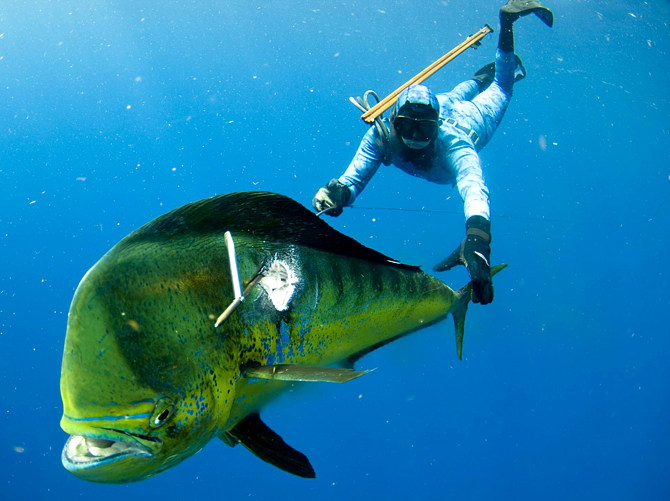 Подводная охота1