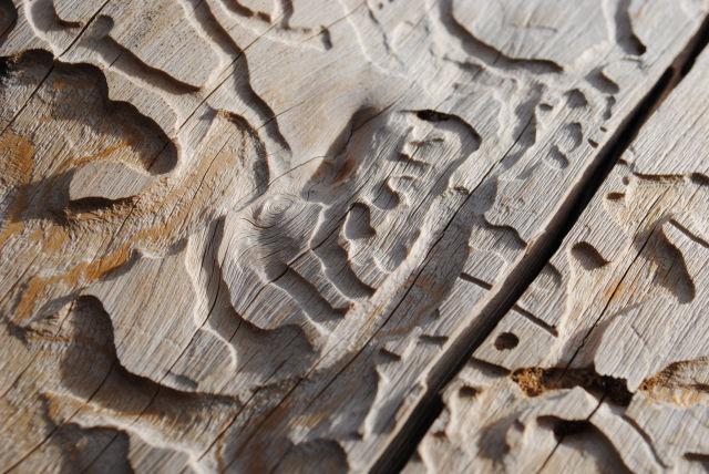 древесина съеденая жуком
